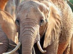 Elephants Camp Begins Near Mettupalayam