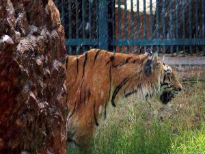 லக்னோ ஜூவில் நடுங்கும் விலங்குகள்: ஹீட்டர் போட்டு சூடேற்றும் நிர்வாகம்