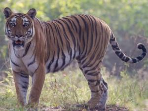 What S A Name From Vijay Ganeshan South Bug Bites Delhi Zo