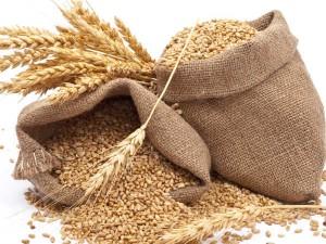 Customs Duty On Wheat Increased
