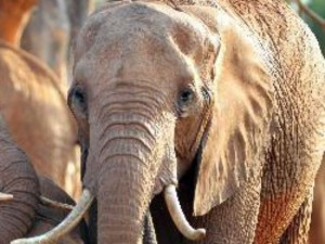 Elephants Camp Begins Near Mettupalayam