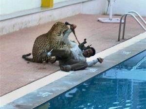 Leopard Strolling Around Bengaluru School On Sunday