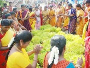 Us Tamils Gearing Up Celebrate Tamil New Year