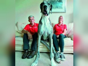 4 Feet Dog Waiting Guinness World Records