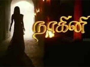 Tamil Tv Industry Calls Ban On Dubbed Hindi Korean Shows