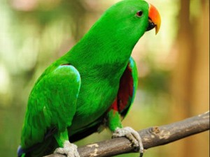 Parrot Reveals Husband S Affair With Housemaid Wife