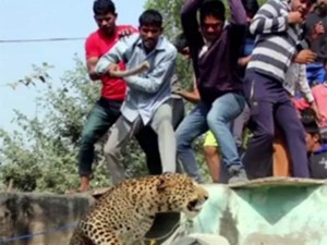 Gurugram Near Village People Beten Death Leopard