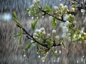 Good Rains Are Coming Tn