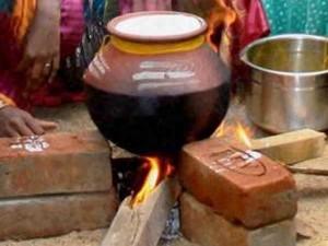 Pongal O Pongal People Celebrated Harvest Festival Tamilnadu