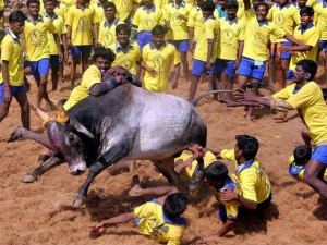 Arts College Students Stage Protest Support Jallikkattu