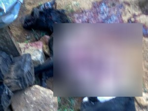 Leopard Attacks Dogs Tn Kerala Border