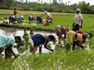 Union Cabinet Approves 2 Percentage Loan Subsidy Farmers