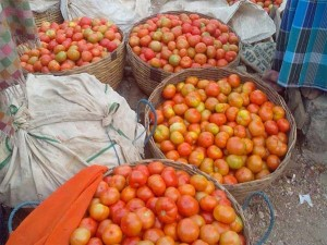Tomato Prices May Fall Down Coming Weeks