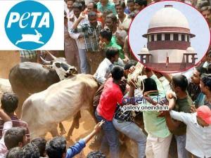 Jallikattu Peta Moves Sc Challenging Tamil Nadu Amendment Act