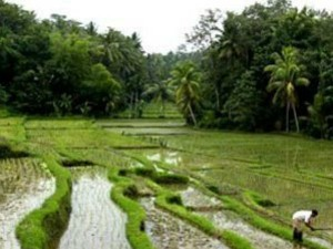 Tamil Nadud Delta Districts Subsidence Due Hydro Carbon Projects
