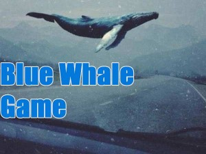 Blue Whale Victim Jumps Front Train Mp