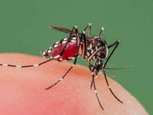 People Affected With Dengue Nellai District