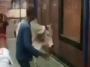Hema Malini Escapes Bull Attack