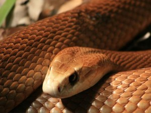 Nigerian Snake Eats 65 Lakhs Money Says Clerk