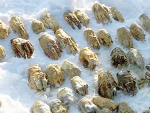Sliced Human Hands Found Amur River Island Russia