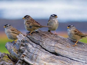 Today Is World Sparrow Day