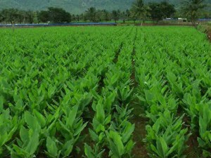 Farmers Coimbatore Requests Set The Base Price Each Product
