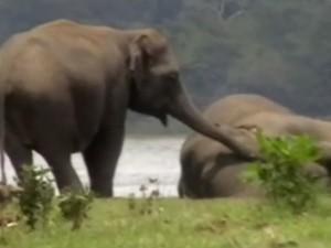 Elephants Paid Tribute The Dead Elephant Srilanka