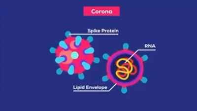 How Coronavirus defeats Immune system of Human body?
