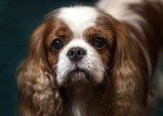 Crufts Show American Cocker Spaniel Emerges Winner