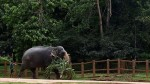Sri Lankan Government S Plan Keep Elephants Healthy