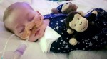 Charlie Gard Parents End Legal Fight Beautiful Baby